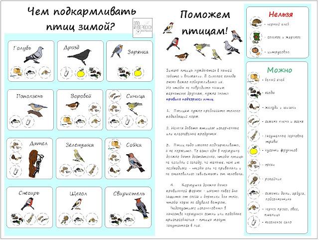 Обучающий плакат для детей про птиц зимой