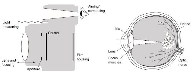 Perbandingan Prinsip Kerja Mata dan Kamera (Sumber : Basic Photography)