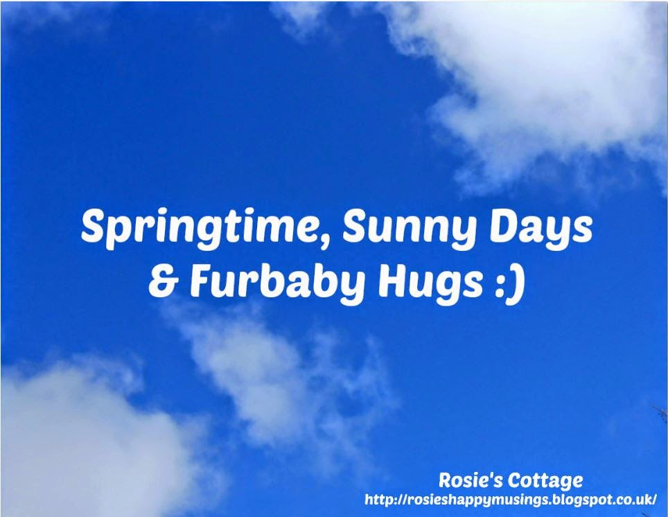 Springtime Sunny Days And Furbaby Hugs