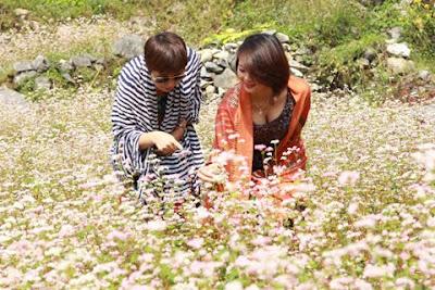 Lễ hội hoa Tam giác mạch Hà Giang lần 2