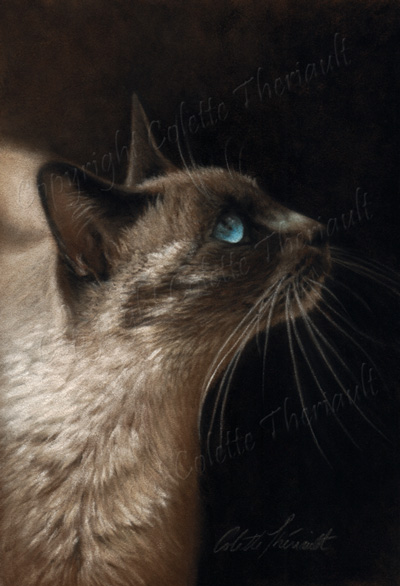 Siamese Cat portrait painting in pastel be Colette Theriault