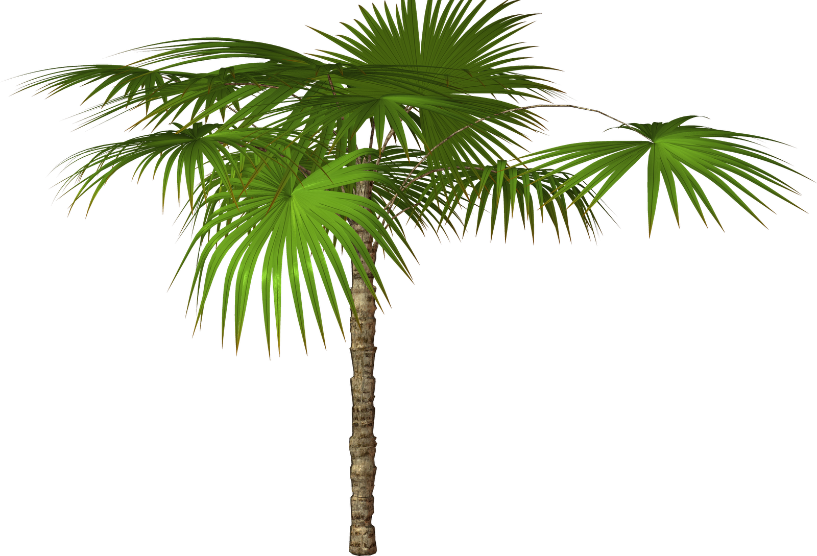 palm tree clip art - photo #23