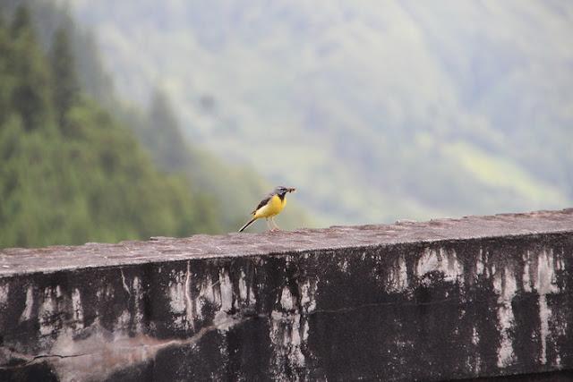 azores wildlife