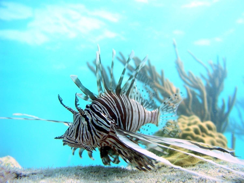 Bird Flower and Fish: Lionfish