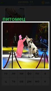 выступает питомец свинья на арене цирка с дрессировщиком