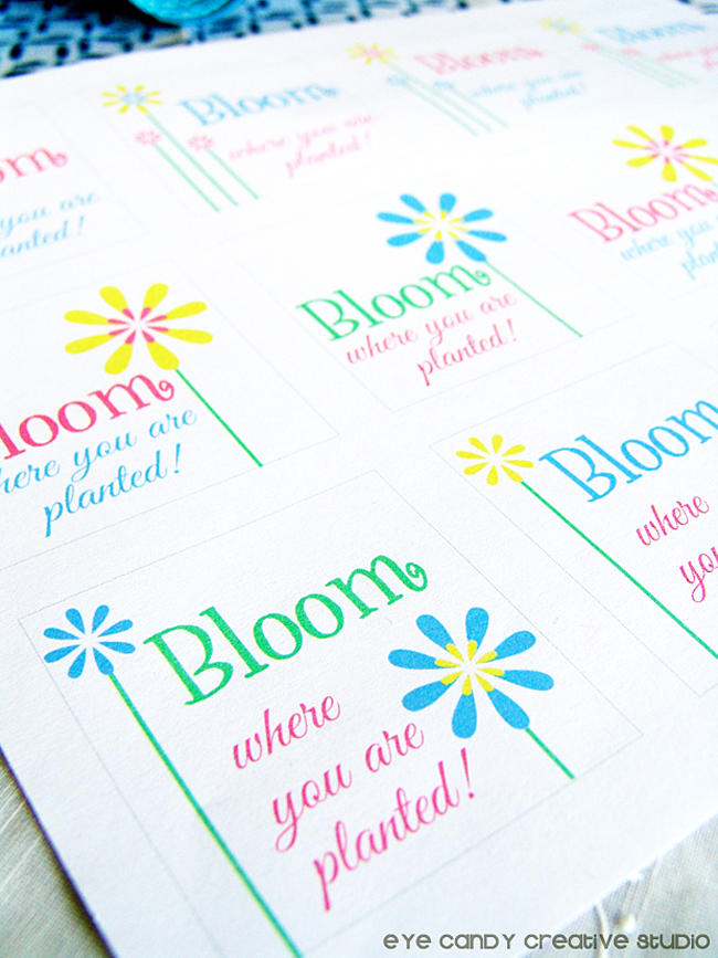 free download, bloom where you are planted, flowers, freebie for spring