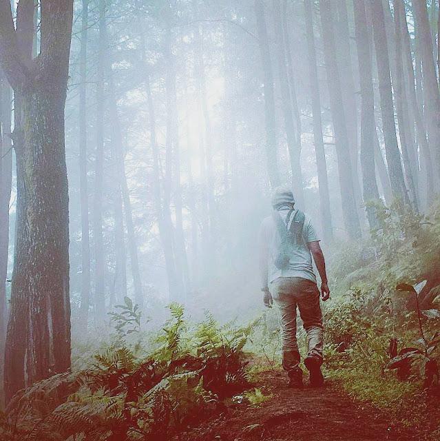 Sejuk Dan Indahnya  Pine forest Camp lembang