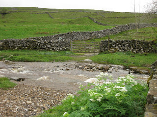 Rocky stream flowing near stone walls with white flowers, Yorkshire Dales, England