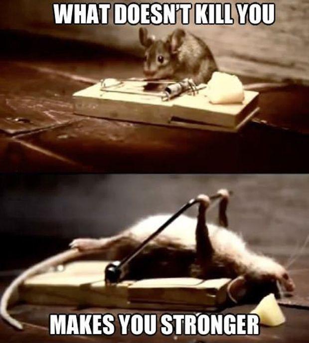 funny mice memes