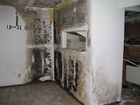 Water Damage Black Mold Solution: Steps on How To Remove It