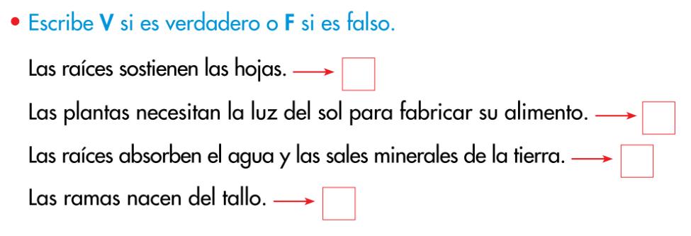 http://www.primerodecarlos.com/SEGUNDO_PRIMARIA/enero/tema1/actividades/CONO/plantas6.swf