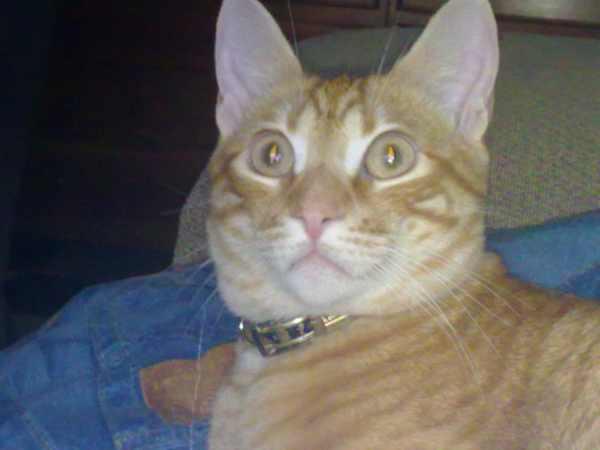 gato-cielo-mascota-amor-angel