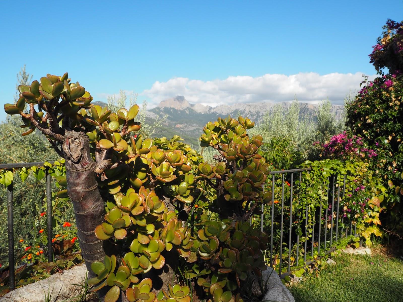 Summer in the soller mountains mallorca