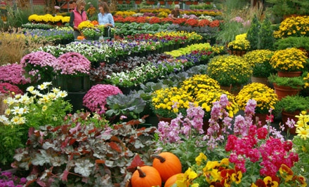50 Off Coupon For Merrifield Garden Center From Groupon