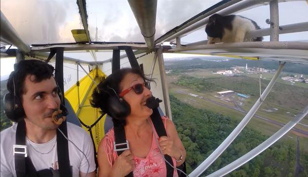 Γάτα στον αέρα! Κοιμόταν στο φτερό και ο πιλότος ούτε που την είχε πάρει χαμπάρι! To BINTEO που κάνει το γύρο του διαδικτύου!!!
