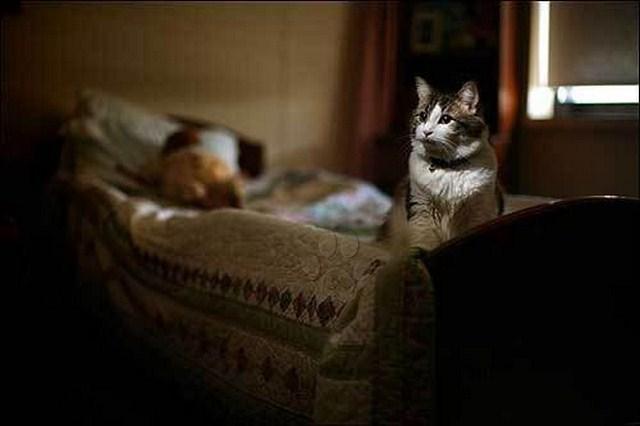 [CURIOSO] Serán los animales capaces de prever la muerte? Parece que Óscar si puede!