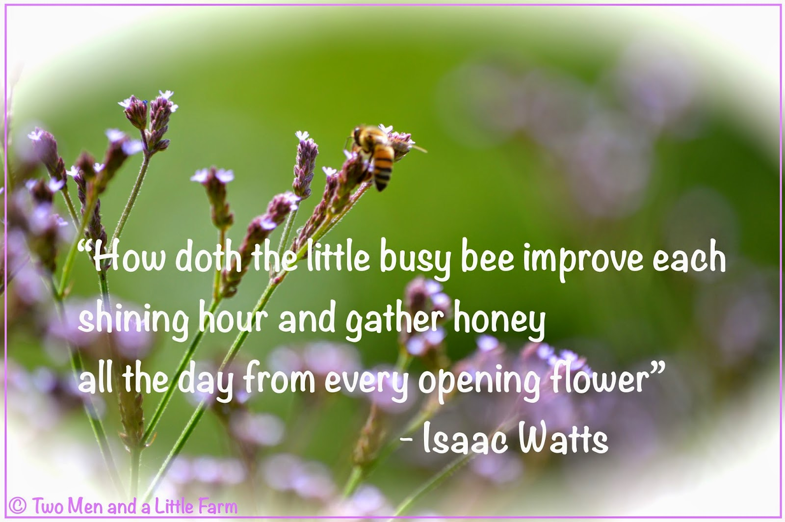 Bee Quotes: Two Men And A Little Farm: BEE QUOTE WITH PICTURE