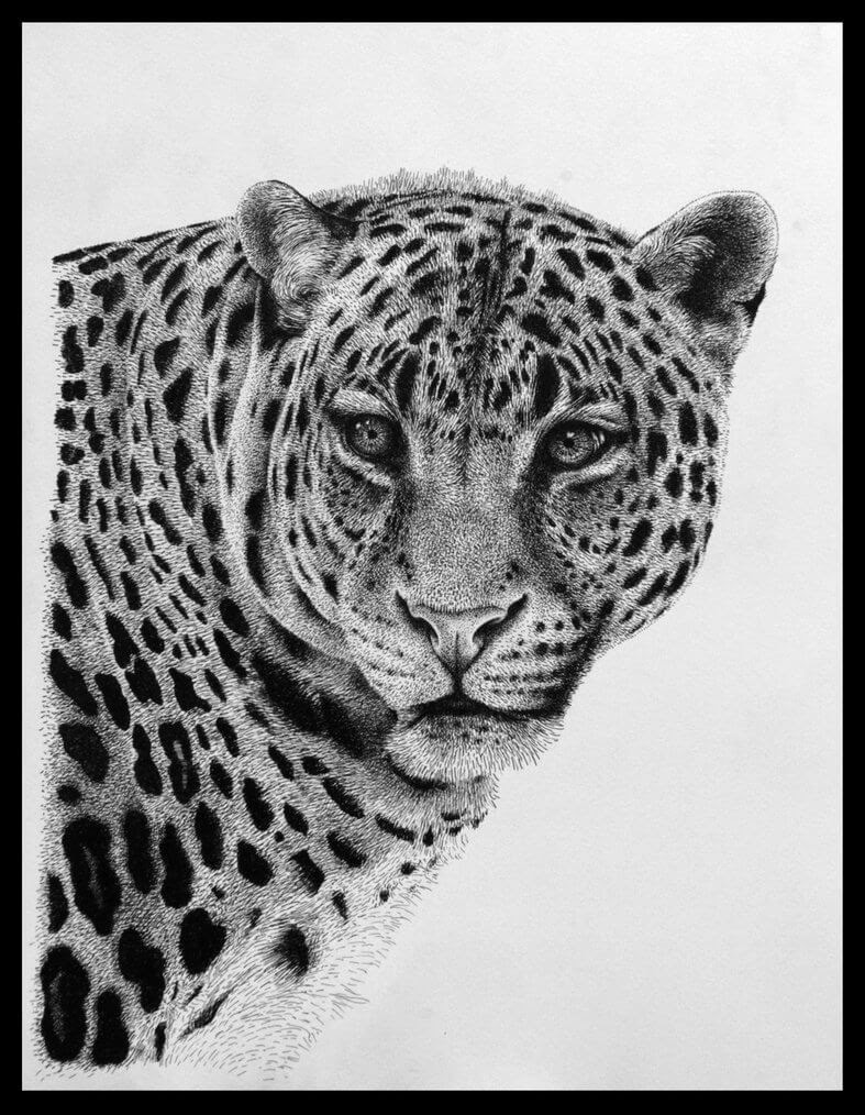 02-Leopard-Rens-Ink-Animal-Wildlife-Pen-and-Ink-Stippling-Drawings