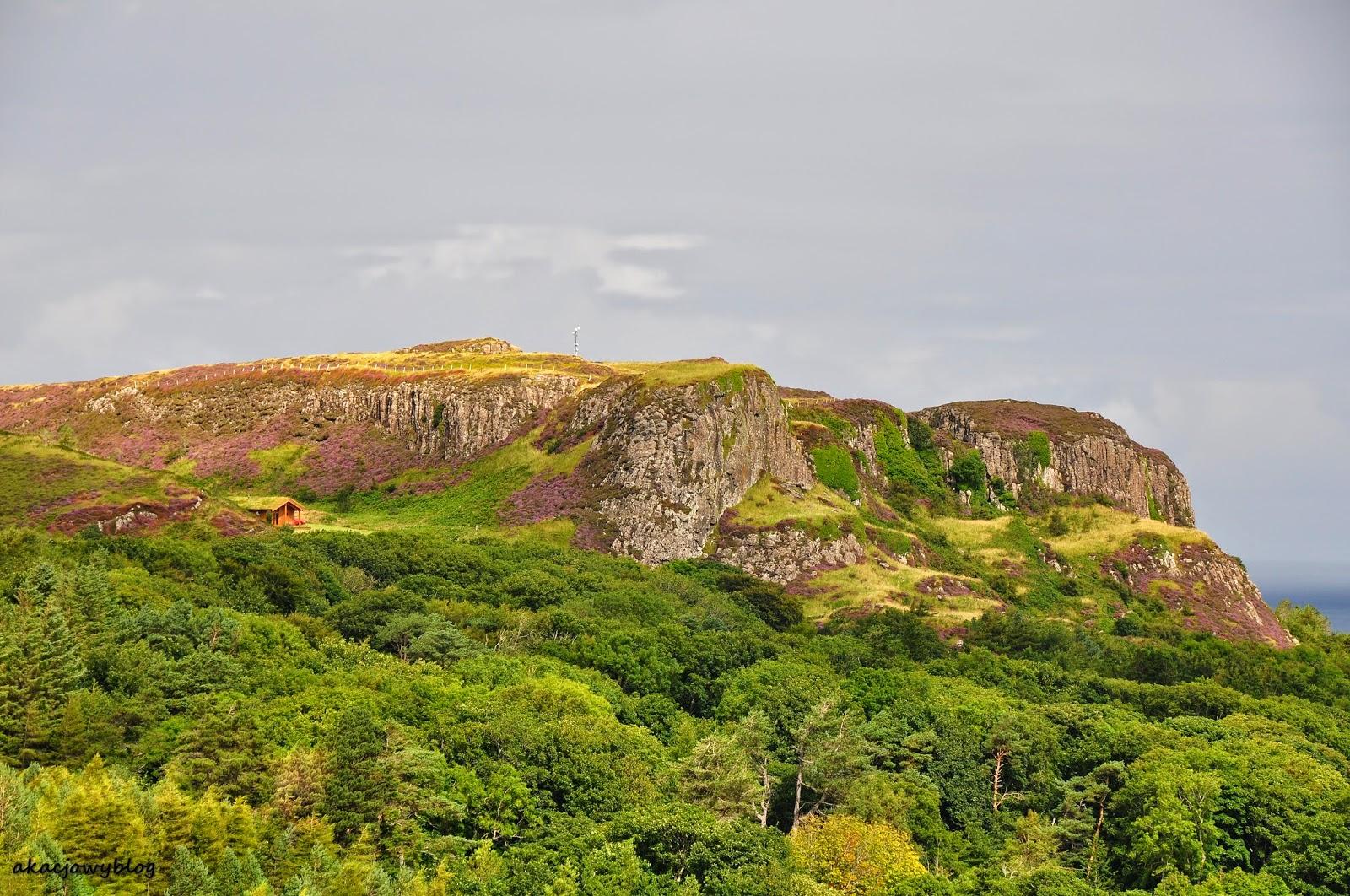 Wrzosowiska w Szkocji.