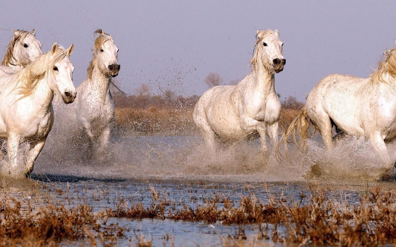 Runners Wedden Op Paarden