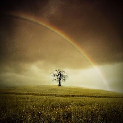 Paisaje con un árbol solitario y el arco iris