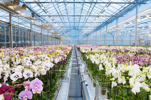 How Greenhouse Climate Works in Plant Growth