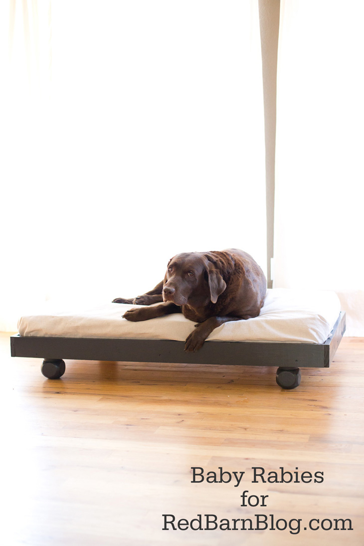 This roll away dog bed is perfect for an older pup that needs some help getting around