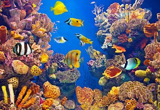Owning an Aquarium Business in Florida