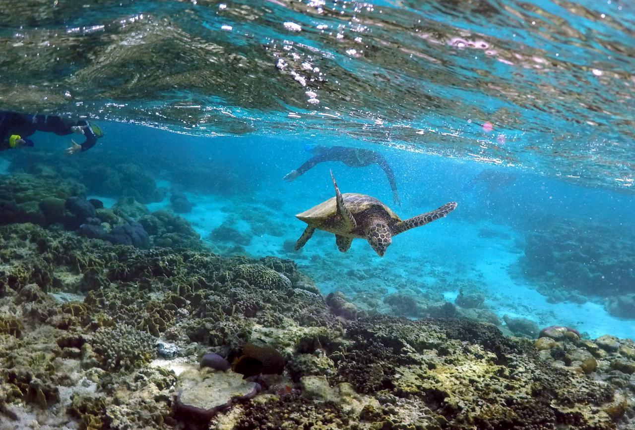 Calentamiento global provoca más nacimientos de tortugas en Gran Barrera