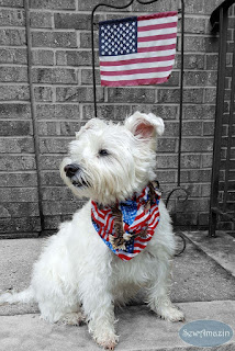 American Flags and Eagles Patriotic Dog Bandana