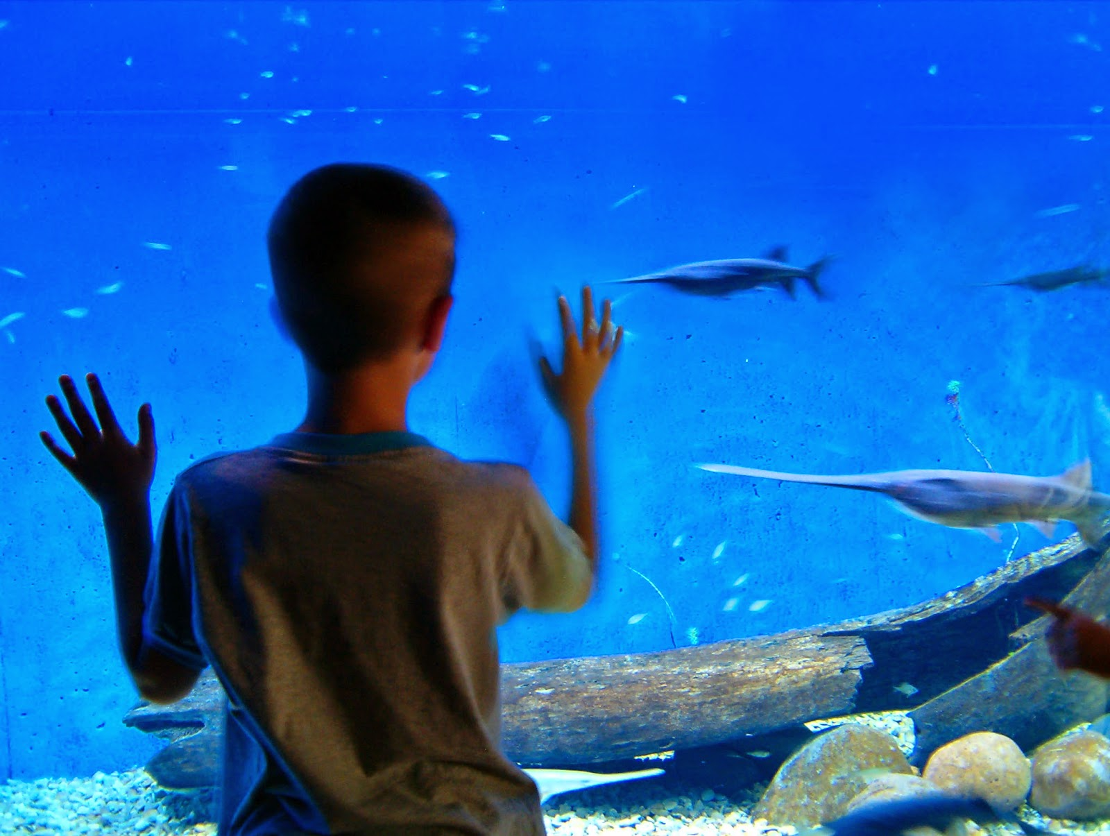 NAMC montessori summer learning ideas follow the child. boy at aquarium