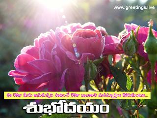 Telugu Good morning wishes Sparkling Sun rays Rose flowers.