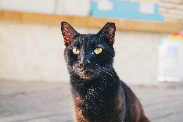 Big Cat Derek Peets