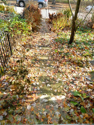 Cabbagetown Toronto Fall Front Yard Garden Cleanup by Paul Jung Gardening Services before