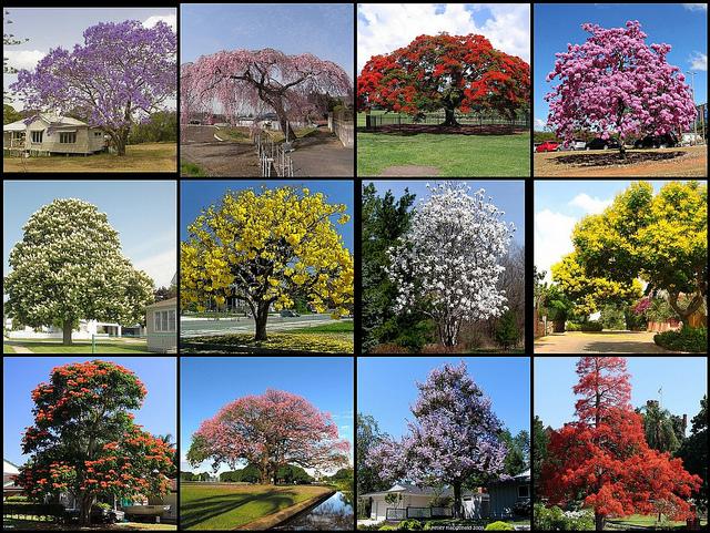 Subhanallah Cantik nya, melihat lihat 12 Pohon Bunga yang Indah dan Mempesona