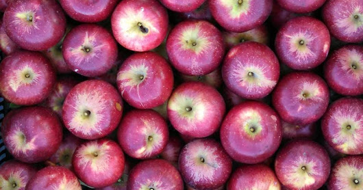 Winter Apple Shares Now Available!