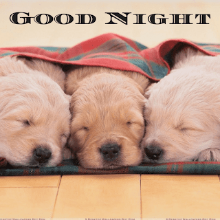 Cute Dog Gud Night Picture for Friends