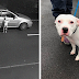 Heartbreaking Footage Shows Dog Trying To Get Back In The Car Without Realizing He Is Being Abandoned