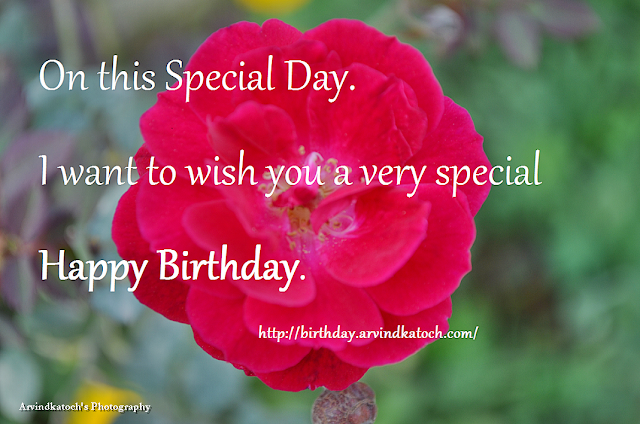 Red Rose, Birthday Card, Special Day, Rose,