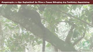 Conservação e o Uso Sustentável da Flora e Fauna Silvestres dos Territórios Amazônicos.