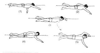 Dari gambar diatas yang merupakan gerakan pengambilan napas pada renang gaya bebas terletak pada nomor ...