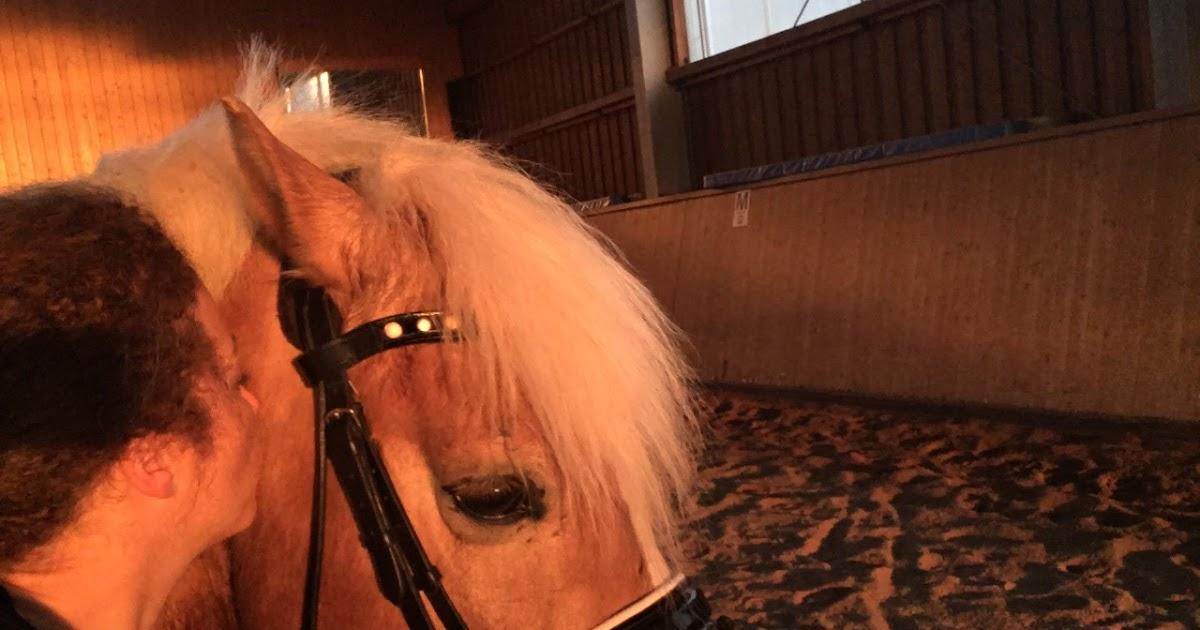 Ode To My Birthday Pony