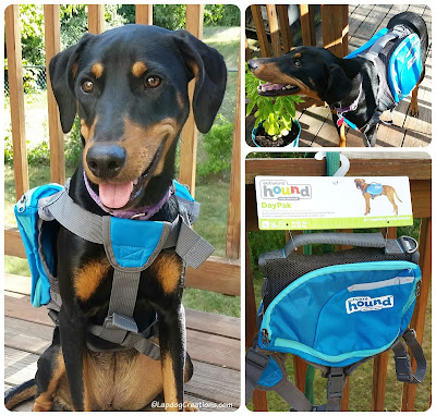 dog wearing Outward Hound DayPak backpack