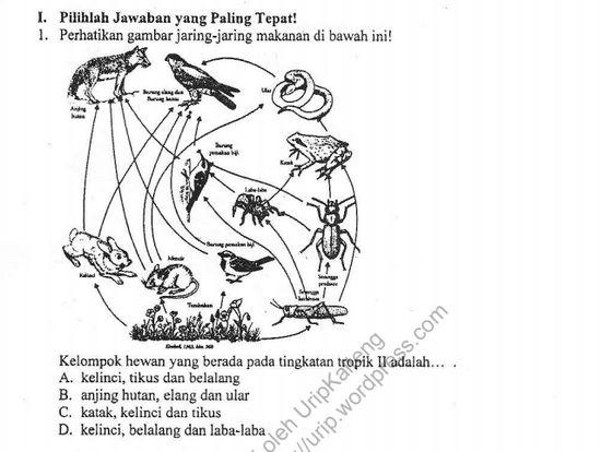 Soal OSN Biologi SMP 2019 Tingkat Kabupaten/ Kota Lengkap dengan Pembahasannya