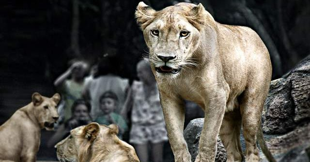 Zoo Admission Bali Zoo Entrance Fee Ticket Bali Zoo Park Package