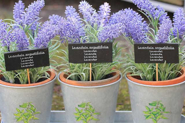 goldandgreen-aromathérapie-lavande