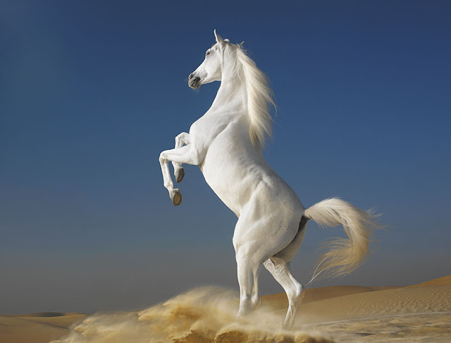 The Reel Foto: Tim Flach: Equus or the Beauty of the Horse