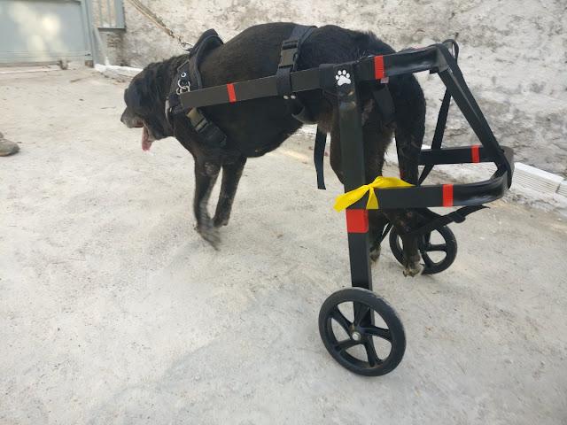 Αναπηρικά αμαξίδια σκύλων Petmobility
