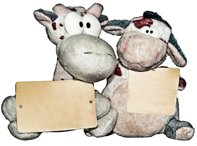 Two stuffed cows holding blank signs.