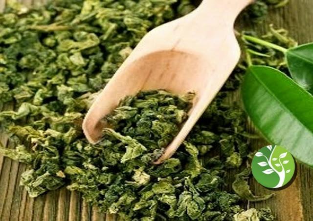 بعد  السرطان: علماء استراليون يثبتون فائدة جديدة لشرب الشاي الأخضر.. اعرف ماهي؟